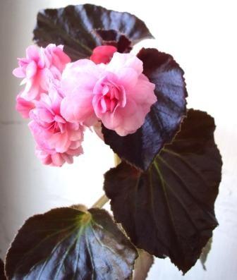 Фото увядшие цветы 182